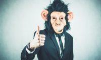 monkey 2710660_960_720 1